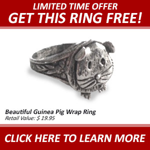 Free Guinea Pig Ring at SmallPetSelect.com