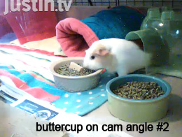 Buttercup on Web Cam