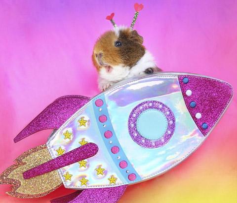 Guinea pig on rocket ship