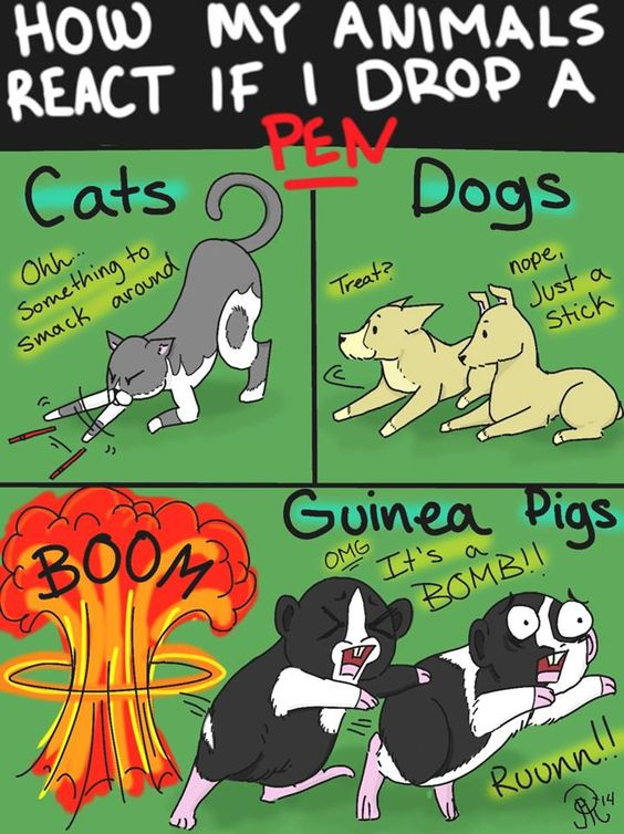How my animals react if I drop a pen cartoon