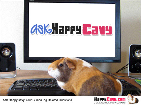 Ask Hammy