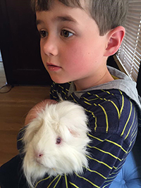 PEW guinea pig sits on a little kid's lap