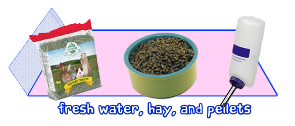 Hay, water, and pellets