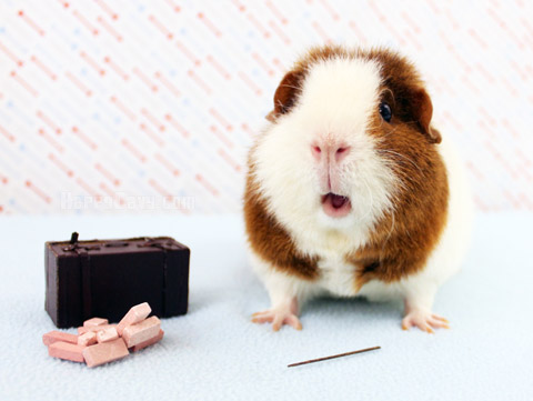Guinea pig with wand in Fantastic Beasts theme photo