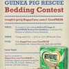 The Guinea Pig Rescue CareFRESH Contest