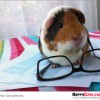 Winning Results for The Guinea Pig Rescue CareFRESH Contest
