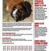San Jose, California: Jenny the Stolen Guinea Pig