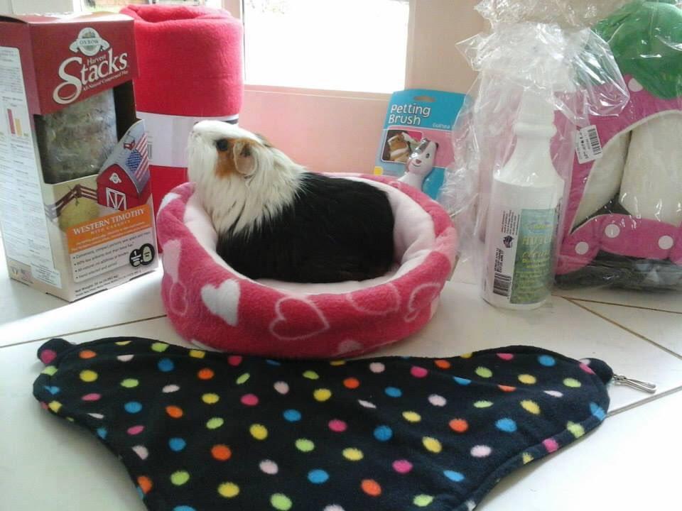 guinea-pig-secret-santa